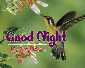 Good Night Images For Friends Images Download