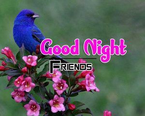Good Night Images For Friends Images Hd