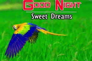 Good Night Images For Friends Photo