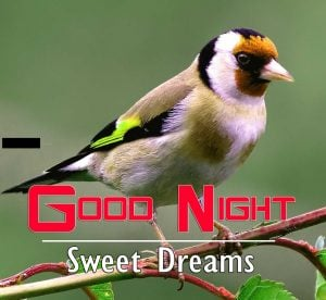 Good Night Images For Friends Photo HD