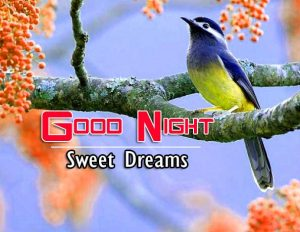 Good Night Images For Friends Photo Images