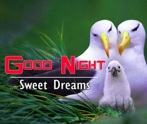 Good Night Images For Friends Wallpaper Images