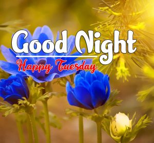 Good Night Tuesday Pics Images Download