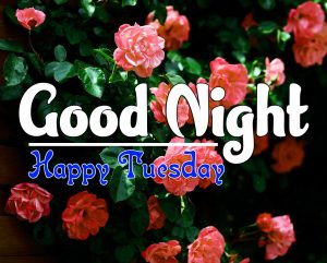 Good Night Tuesday Pics Images Free Download