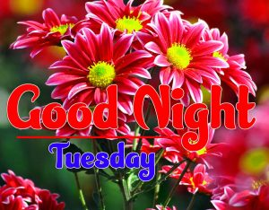 Good Night Tuesday Pictures Download