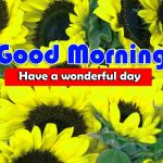 HD Free New Sunflower Good Morning Images