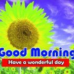 HD Latest Sunflower Good Morning Pics