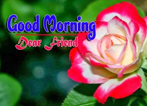 Latest Good Morning For Facebook Wallapper Pics