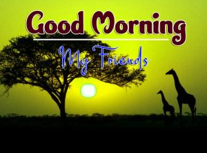 Latest Good Morning Friday Wallpaper Download