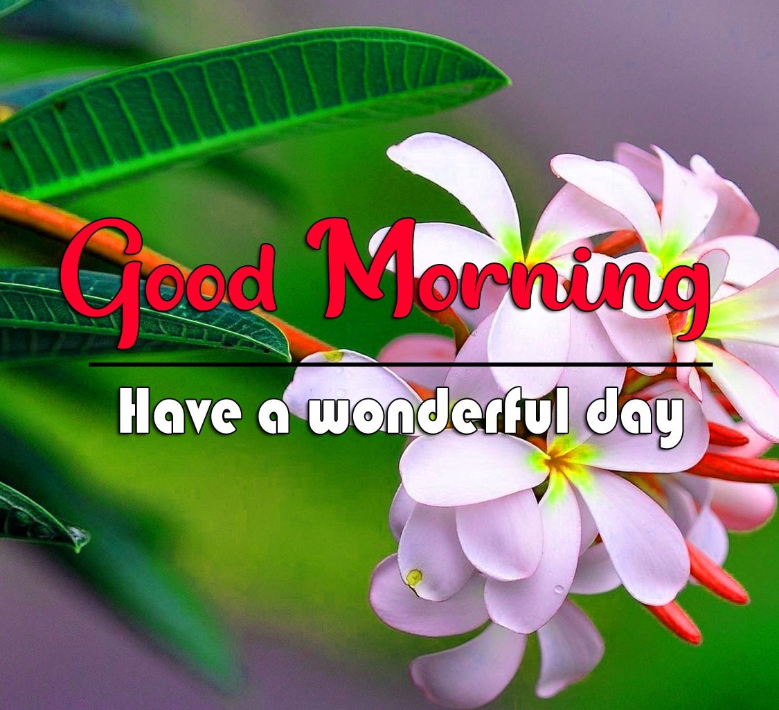 Latest Good Morning Images Wallpaper Free