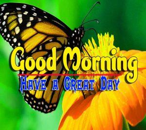 Latest Good Morning Pics Free