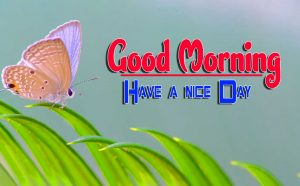 Latest Good Morning Pics Wallpaper