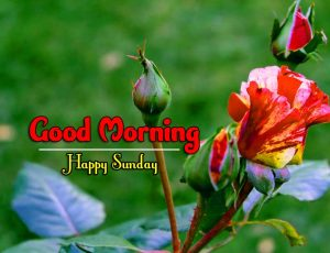 Latest Good Morning Sunday Download Wallpaper
