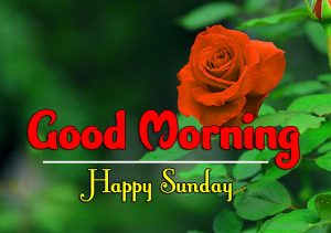 Latest Good Morning Sunday HD Free Images
