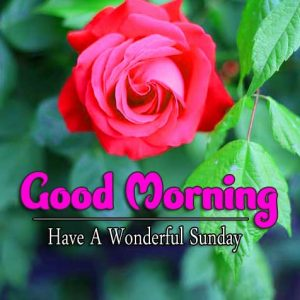 Latest Good Morning Sunday Hd Wallpaper