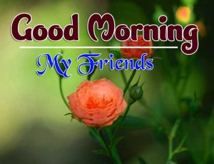 Latest Good Morning Sunday Images Wallpaper