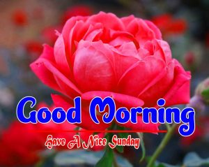 Latest Good Morning Sunday Pictures Wallpaper