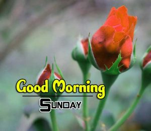 Latest Good Morning Sunday Wallpaper Download