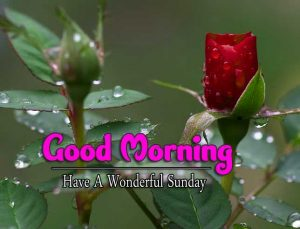 Latest Good Morning Sunday Wallpaper Pictures