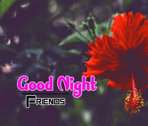 Latest Good Night Images For Friends Photo Free