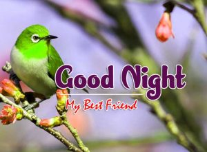 Latest Good Night Images For FriendsImages