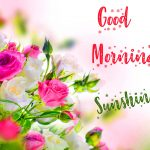 Latest Nature Good Mornign Images Download