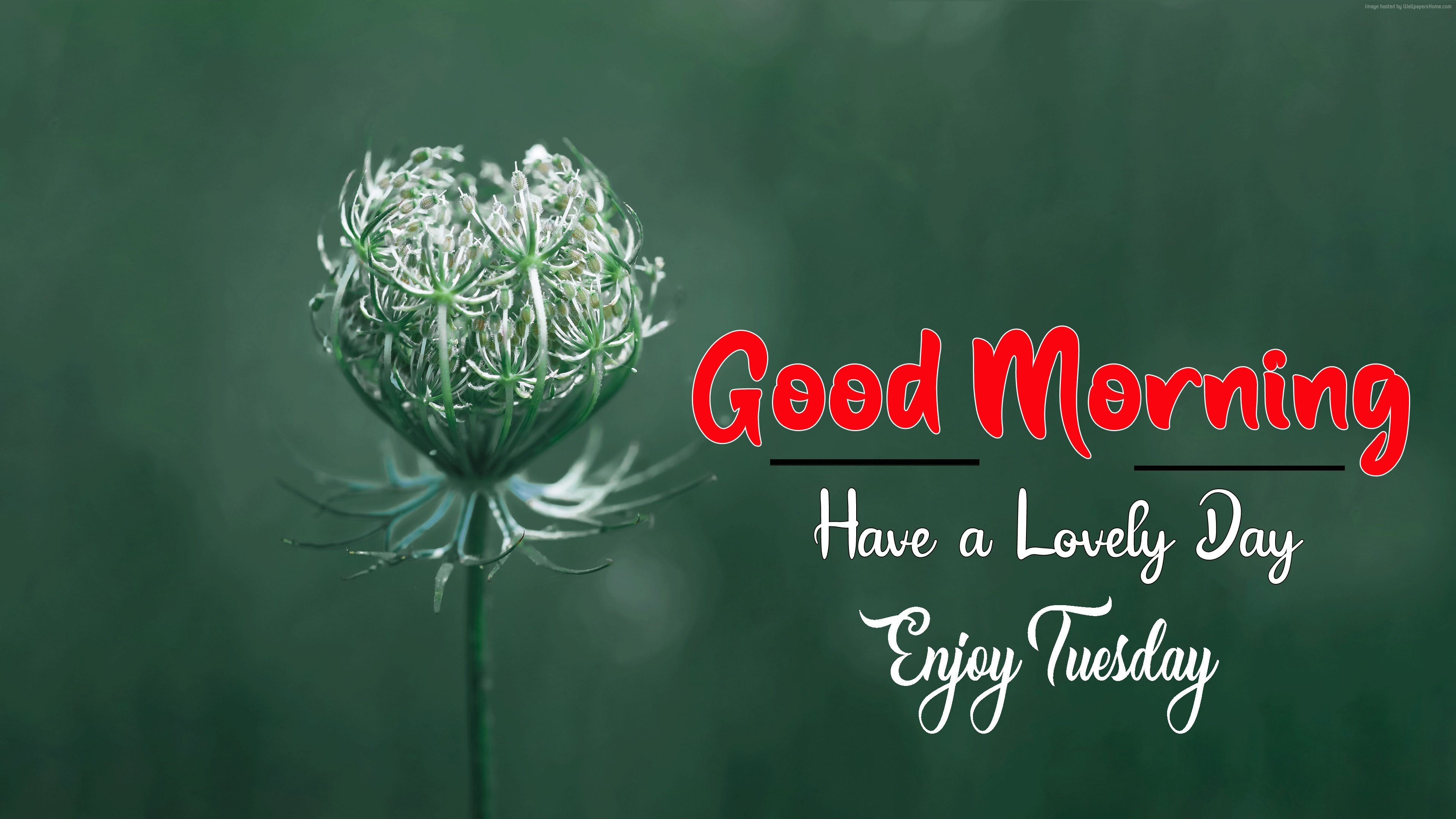 Latest Nice Good Morning Images pics photo for facebook