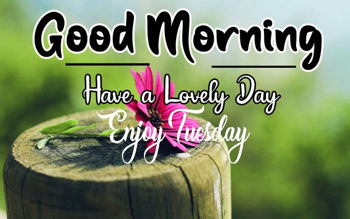 Latest Nice Good Morning Images pics photo hd download