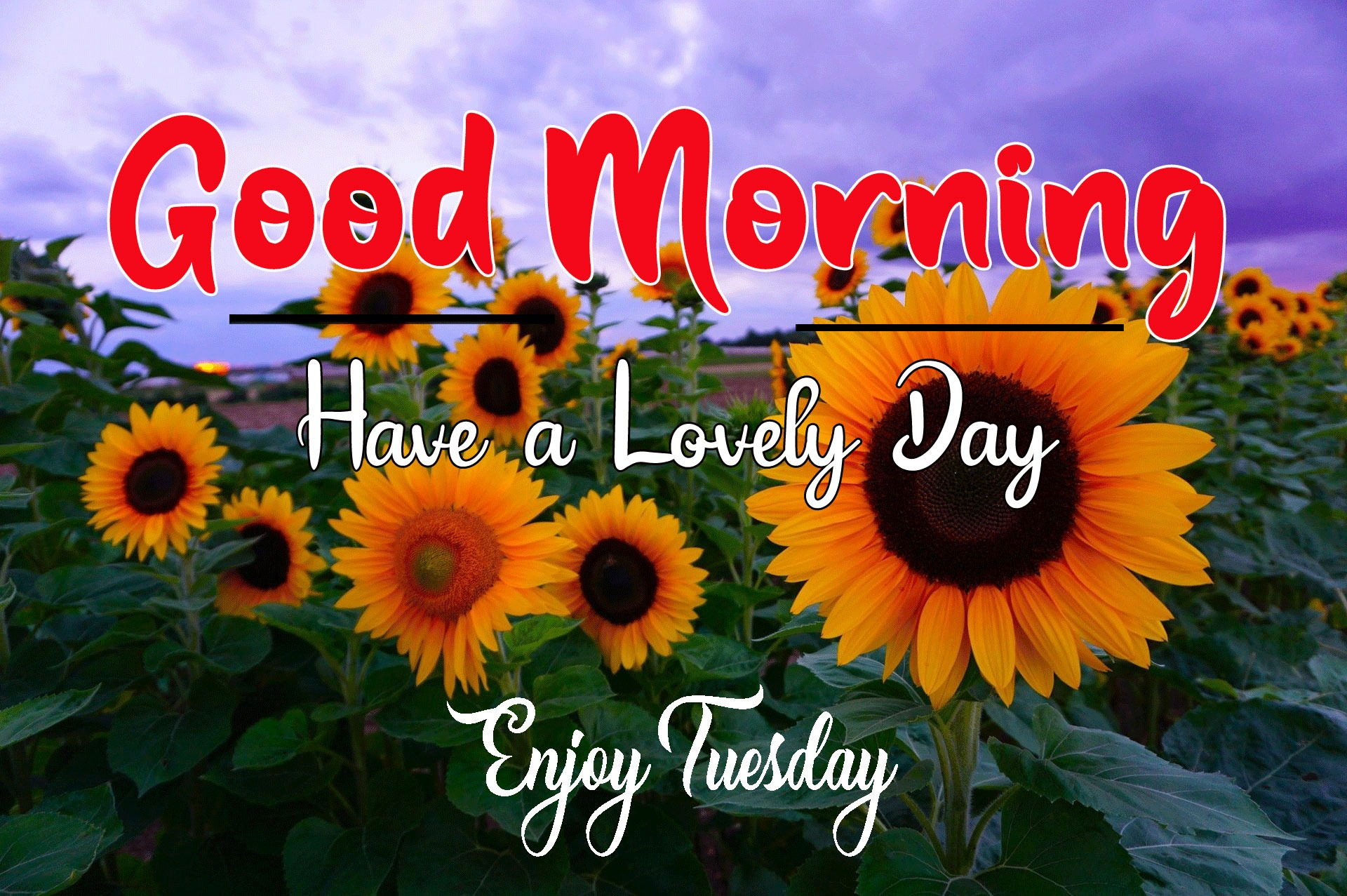Latest Nice Good Morning Images pictures free hd download