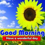 Latest Sunflower Good Morning Photo Wallpaper