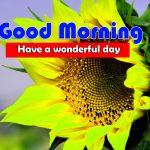 Latest Sunflower Good Morning Pics