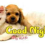 Free Love Couple Free Good Night Images Wallpaper