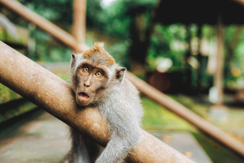 Monkey Funny Whatsapp DP Wallpaper