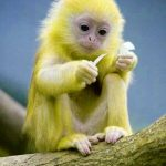 Monkey comedy dp Pics Images Download
