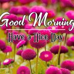 Nature Latest Good Morning Images For Facebook
