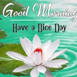 Nature Latest Good Morning Images For Whatsapp