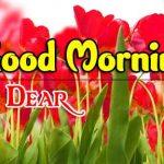 New Flower Good Morning Images