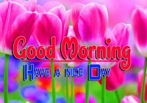New Good Morning For Whatsapp Free Download