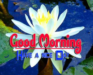 New Good Morning For Whatsapp Free Images Download