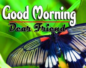 New Good Morning Free Images Download