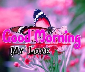 New Good Morning Images Pics