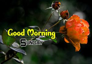 New Good Morning Sunday Pics Photo Hd