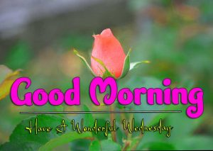 New Good Morning Wednesday Download