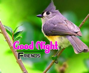 New Good Night Images For Friends Download