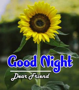 New Good Night Images For Friends Images