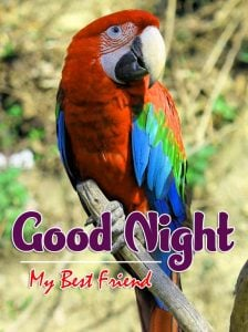 New Good Night Images For Friends Pics Photo