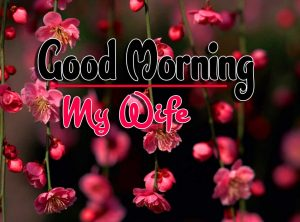 New HD FreeNew Good Morning For Whatsapp Pics