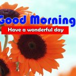 New Sunflower Good Morning Images Pics