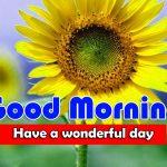 New Sunflower Good Morning Wallpaper