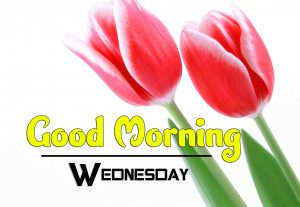 Nice Good Morning Wednesday Images